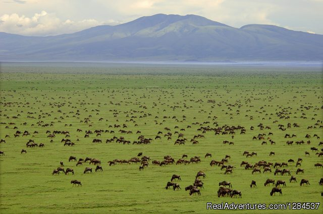 9-Day Wildlife Safari With Maasai Experience