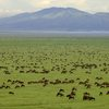 9-Day Wildlife Safari With Maasai Experience Dar es Salaam, Tanzania Wildlife & Safari Tours