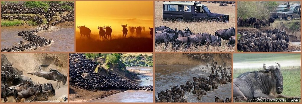 Migration of Wildebeest in Kenya | Image #9/11 | Best Safari Packages At The Earth Safari Pvt. Ltd.