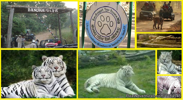 Best Safari Packages At The Earth Safari Pvt. Ltd. Dehli, India Wildlife & Safari Tours