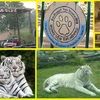 Best Safari Packages At The Earth Safari Pvt. Ltd. Wildlife & Safari Tours Dehli, India