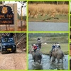 Best Safari Packages At The Earth Safari Pvt. Ltd.