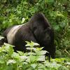 Tours to Uganda, Kenya, Tanzania,Rwanda,Zanzibar Kampala, Uganda Wildlife & Safari Tours