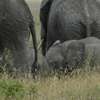 Safari to Mikumi National Park Arusha, Tanzania Wildlife & Safari Tours