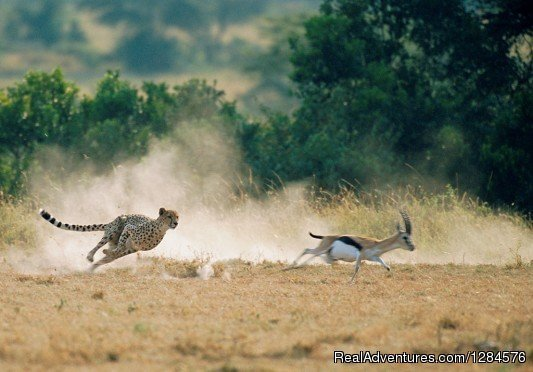 Image #3/3 | 3 Day Masai Mara Safari Package