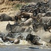 3 Day Masai Mara Safari Package Nairobi, Kenya Wildlife & Safari Tours