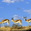3 Day Masai Mara Safari Package