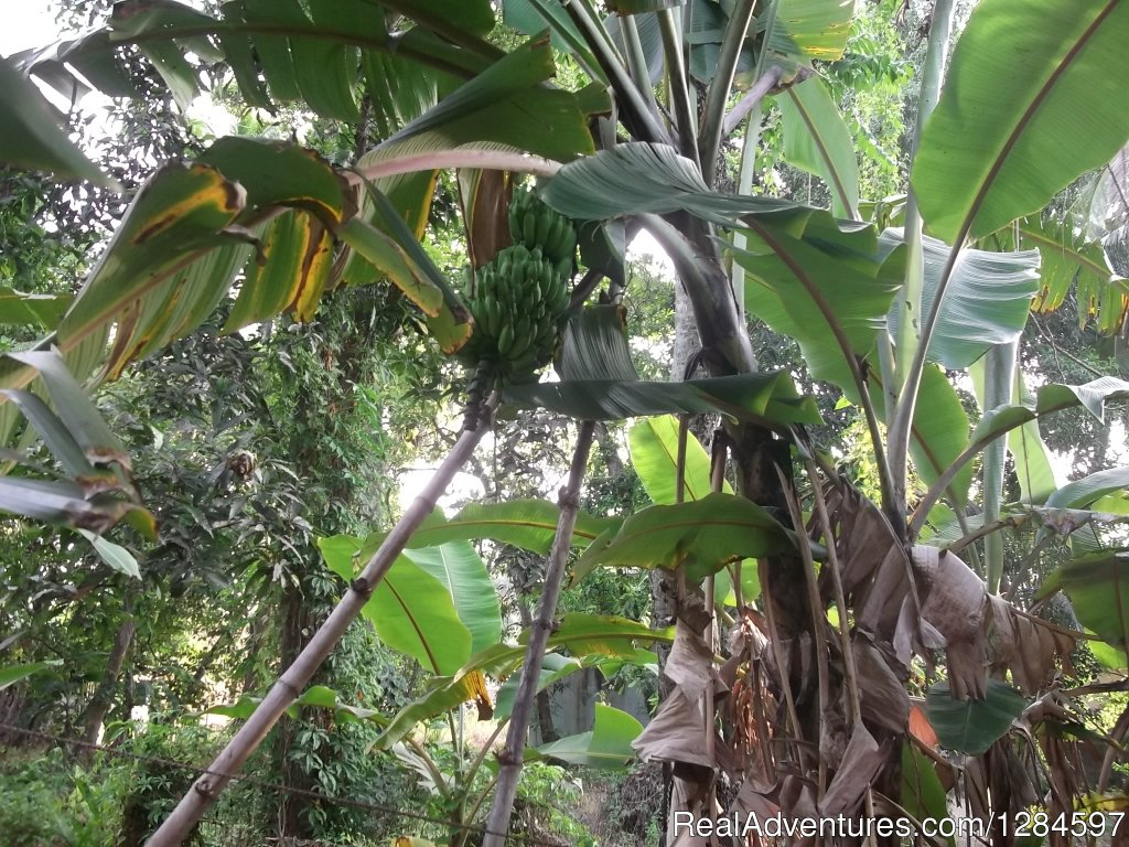 Our Garden 03 | Image #5/8 | Sweet Memories with Negombo Backpackers