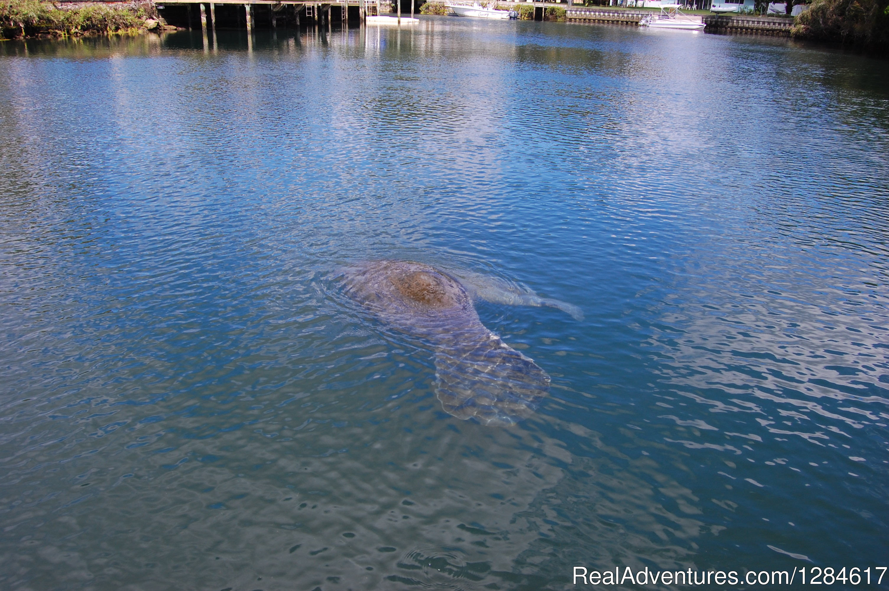 Manatee Watching | Image #8/8 | Health & Wellness Wholistic Resort