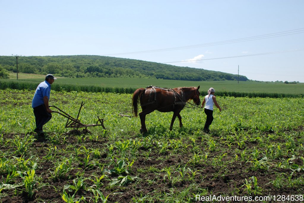 Image #8/26 | Discover Authentic Romania - 3 to 12 day tour