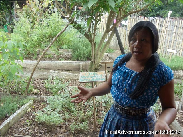 Traditional Herbal Medicine Garden - Guatemala Herbal Medicinal Tour