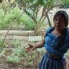 Guatemala Medicinal Tour 1 Day