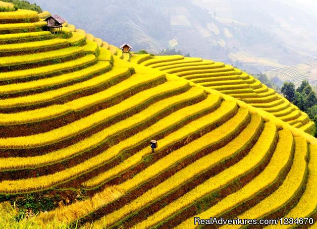 Best Of Vietnam Tours 12 Days