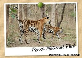 Pench Wildlife Safari Packages