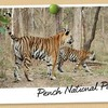 Pench Wildlife Safari Packages