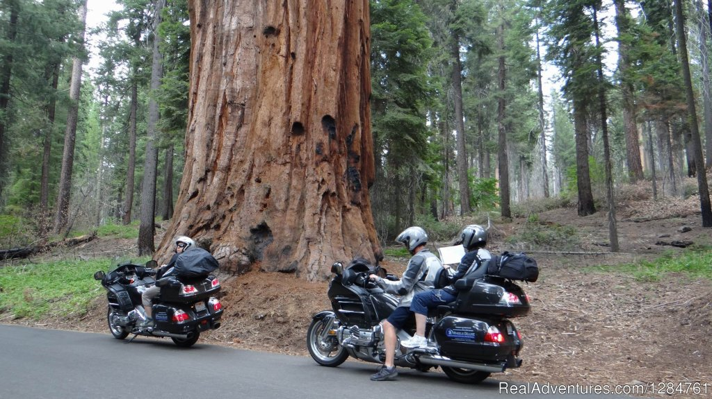 Yosemite, Red Woods, Pacific Coast  beautiful California | Image #9/20 | Touring Motorcycles Rental And Accommodations