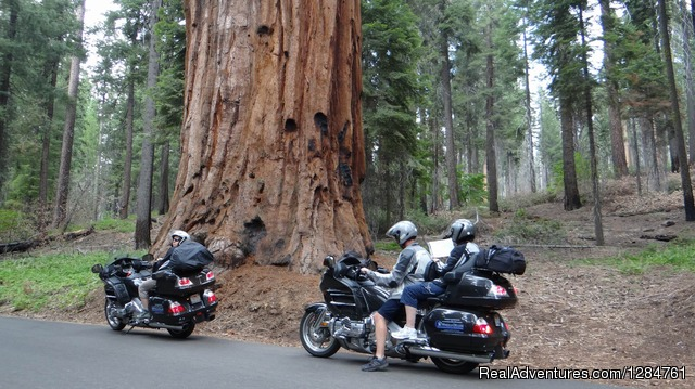 Yosemite, Red Woods, Pacific Coast  beautiful California - Touring Motorcycles Rental And Accommodations