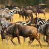 Serengeti Wildlife Safari &Zanzibar Beach Vacation
