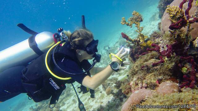 Share your adventures - Volunteers 4 Marine Conservation