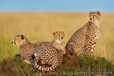 7Days -Tanzania Backpackers  Safari-Northern Circu