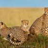 7Days -Tanzania Backpackers  Safari-Northern Circu Arusha, Tanzania Wildlife & Safari Tours