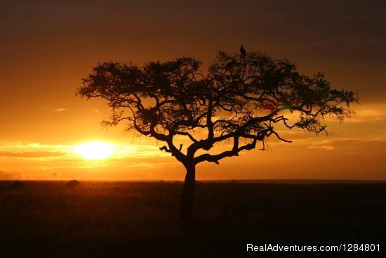 Tailor Made Safaris to Tanzania