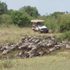 Amazing safari to Serengeti and Kilimanjaro Arusha, Tanzania Wildlife & Safari Tours
