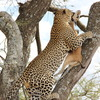 Explore Tanzania Safaris Tanzania Sight-Seeing Tours
