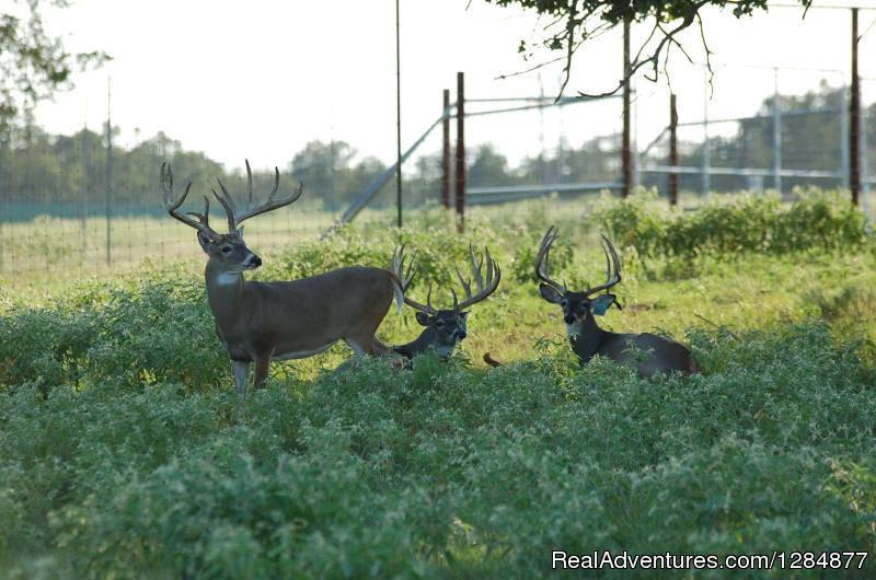 Image #1/14 | Caldwell, Texas  | Hunting Trips | Buck Trader