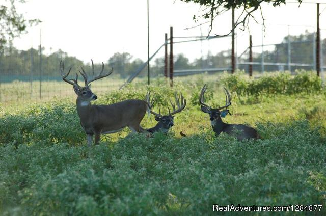 Buck Trader Hunting Trips Caldwell, Texas