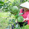 Discover beauty of Mekong Rustic in Vietnam
