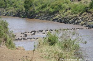 03 Days Maasai Mara Migration Safari from Kisumu Nairobi, Kenya Wildlife & Safari Tours
