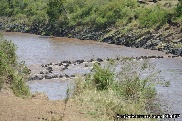 03 Days Maasai Mara Migration Safari from Kisumu