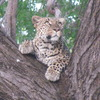 Kenya Budget and Luxury Safari Packages