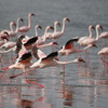 7 Days: Amboseli | Naivasha | Nakuru | Mara