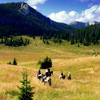 Premier Cowboy Trail Horseback Riding in Croatia