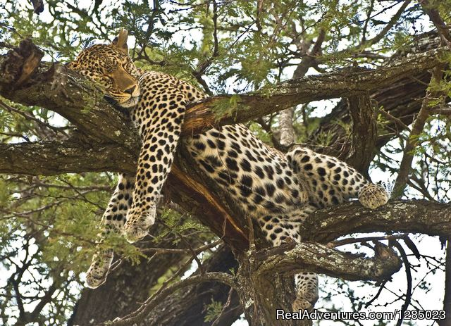 5 Days - Tanzania Wildlife Safari