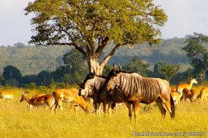 Agama Tours and Safaris Arusha, Tanzania Sight-Seeing Tours
