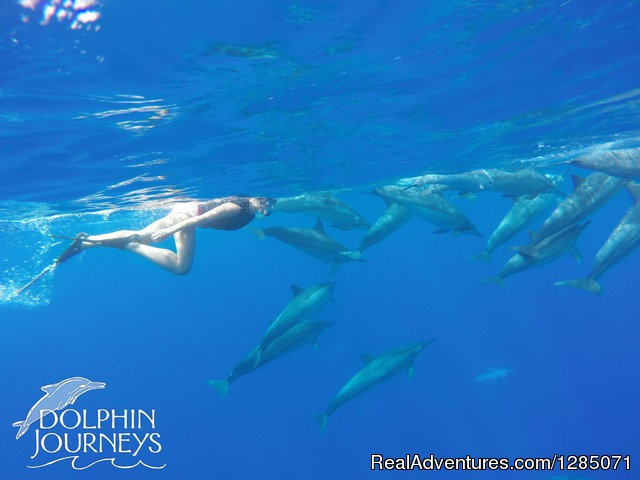 Becoming one of the pod - Dolphin Journeys - Kona Coast  Big Island Hawaii