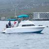 Dolphin Journeys - Kona Coast  Big Island Hawaii