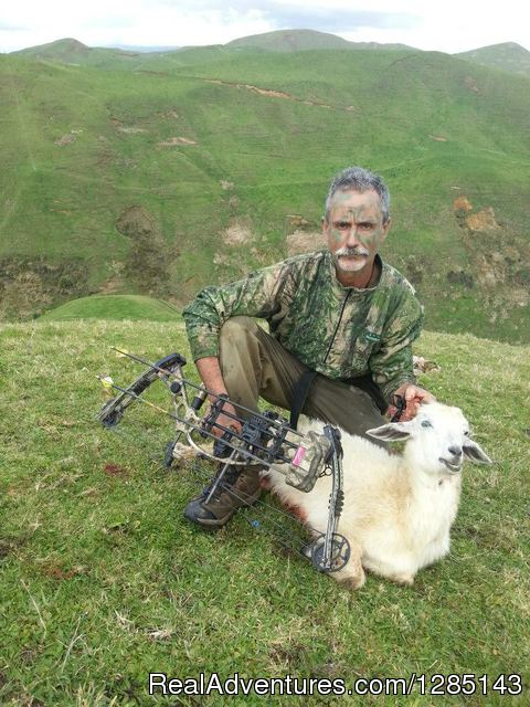 2 Days Bow Hunting Goats New Zealand Hunting Trips Raglan, New Zealand