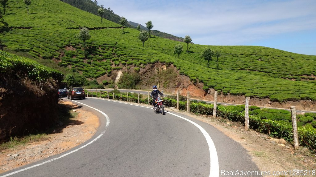 Tea plantation in South India | Image #3/25 | Motorcycle Tours India -Royal Bike Riders