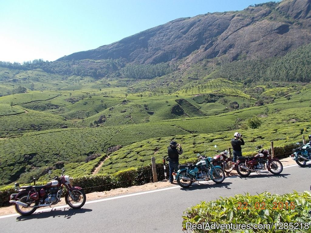 Huge Tea Plantation in South India. | Image #7/25 | Motorcycle Tours India -Royal Bike Riders