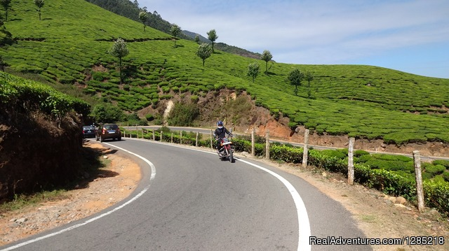 Tea plantation in South India - Motorcycle Tours India -Royal Bike Riders