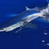 Oceantur Sportfishing Azores