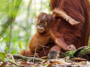 2 Days Jungle Trek - Into The Wild Bukit Lawang Medan, Indonesia Hiking & Trekking