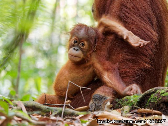 2 Days Jungle Trek - Into The Wild Bukit Lawang