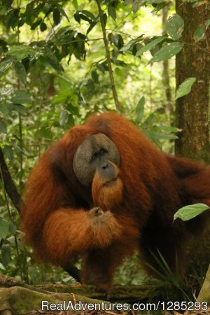 10 Days Leuser National Park Expedition Medan, Indonesia Hiking & Trekking