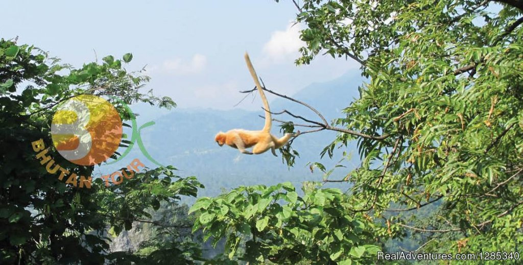 Monkey | Image #5/6 | Bhutan Travel Agency