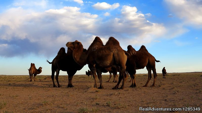 Image #21/26 | Staying With Mongolian Nomads Family Tour